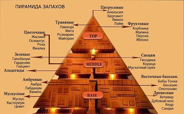 Пирамида запахов